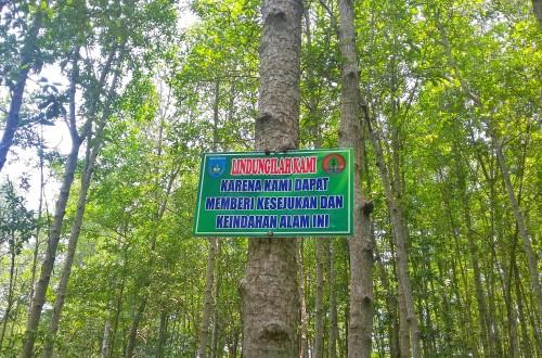 HImbauan agar menjaga hutan